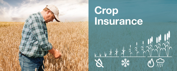 Crop Insurance 2018 preview hero