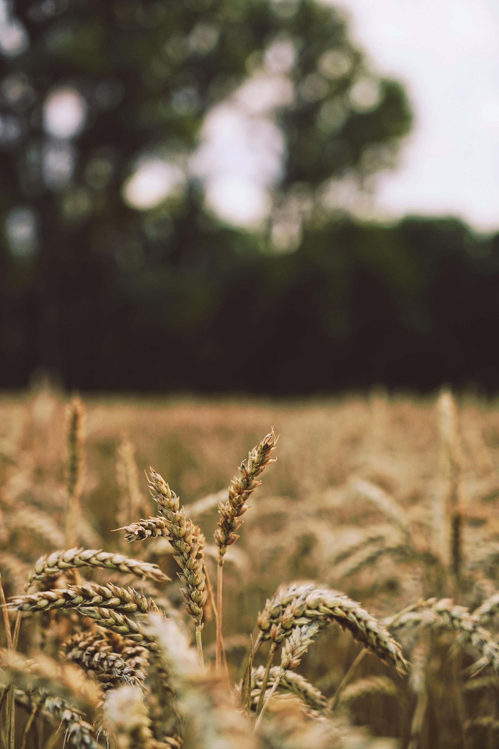 Grain_Markets_13042021
