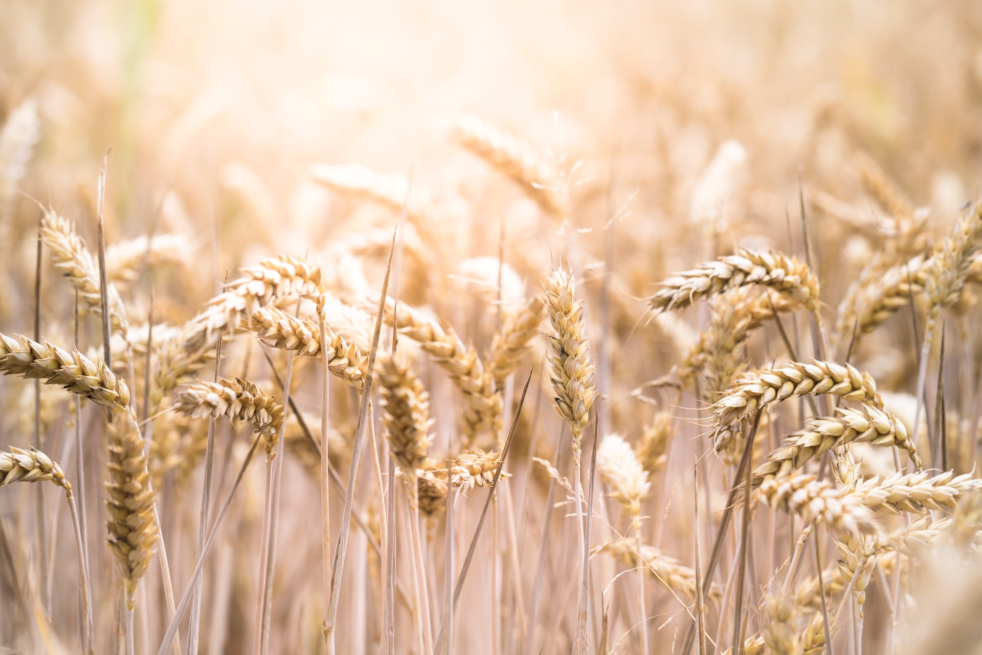 Wheat_06102021